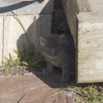 Kittens under the deck