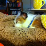 Spike asleep